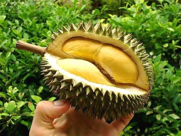 Дуриан: где и как растет, вкус и запах, польза и вред фрукта