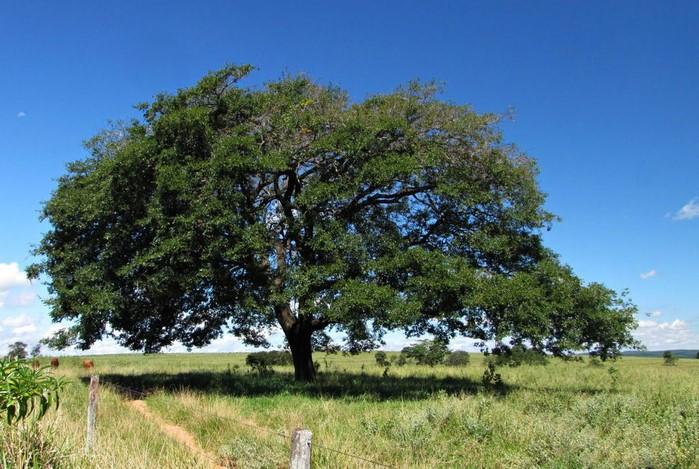 Нефтяное дерево ханга