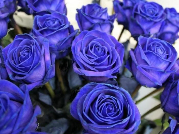 Розы голубого цвета